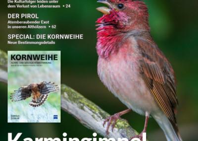 "Karmingimpel: ""Vögel Heft 3-20"""